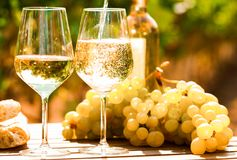Glass of White wine ripe grapes and bread on table in vineyard. Glass of dry White wine ripe grapes and bread on table in vineyard stock photo