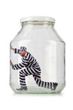 Glass empty jar Stock Images
