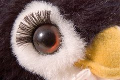 Glass Eye. A glass eye on a stuffed animal with long eye lashes Stock Image