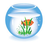 Glass fishbowl with a fish. On a white background Stock Image