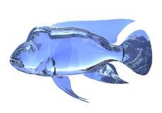 glass fisk för illustration som 3d isoleras på vit bakgrund Arkivfoto