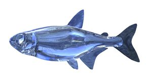 glass fisk för illustration som 3d isoleras på vit bakgrund Fotografering för Bildbyråer