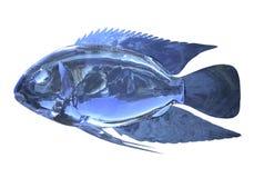 glass fisk för illustration som 3d isoleras på vit bakgrund Arkivbilder