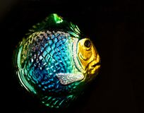 Glass fiskjulgranprydnad royaltyfri bild
