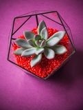 Glass florarium. Handmade glass florarium, home deign Stock Images