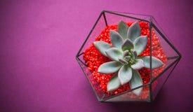 Glass florarium. Handmade glass florarium, home deign Stock Photos