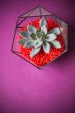 Glass florarium. Handmade glass florarium, home deign Royalty Free Stock Image