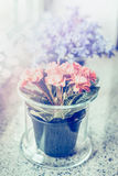 Glass flower pot with lovely pink flowers on windowsill royalty free stock photography