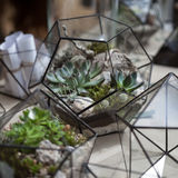 Glass flowerpots for succulents and flowers. Handmade flower pots for plants Stock Image