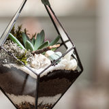 Glass flowerpots for succulents and flowers. Handmade flower pots for plants Stock Photos