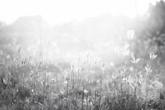 Glass flowers in the graden. Vintage black and white nature background stock photos