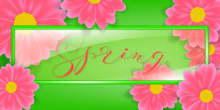 Glass frame, vector illustration with lettering Spring word. In background Flowers daisy or gerber. Stock Images