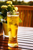 Glass of fresh beer Stock Photography