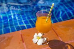 Glass of fresh cool orange juice drink with flower on border of Royalty Free Stock Photo