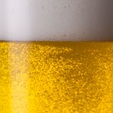 Pouring beer. A glass of fresh golden beer with froth. ideal for websites and magazines layouts Stock Images