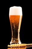 Lager beer on black Stock Images