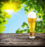 Glass of fresh lager beer Royalty Free Stock Photo