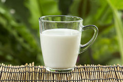 Glass of fresh milk Stock Image