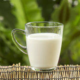 Glass of fresh milk Stock Photos