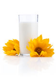 Glass of fresh milk and two yellow flowers Stock Photos