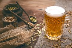 Glass of frothy beer, malt and hop. Cold foam beer with malt grain, green hop leaves in the pots and rye ears on burlap cloth on brown wooden table background stock image