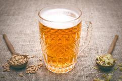 Glass of frothy beer, malt and hop. Glass of light beer with scattered around hop and malt and rye ears on aged wooden table background royalty free stock photo