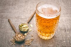 Glass of frothy beer, malt and hop. Glass of light beer with scattered around hop and malt and rye ears on aged wooden table background royalty free stock photos