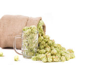 Glass full of green hop cones. Stock Photos