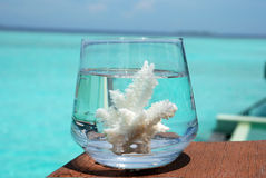 Glass full of sea Royalty Free Stock Image