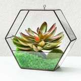 Florariums on table. Home gardening hobby concept. Glass geometric florarium vase with mini succulent garden at table. Home gardening hobby concept royalty free stock photos