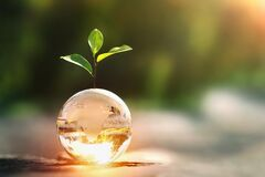 Free Glass Globe Ball With Tree Growing And Green Nature Blur Background. Eco Earth Day Concept Royalty Free Stock Images - 210005939
