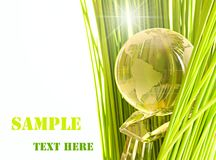 Glass globe in fresh green grass. Royalty Free Stock Photo