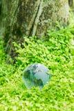 Glass globe in green grass Stock Image