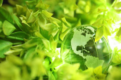 Glass globe in leaves Stock Photo
