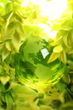 Glass globe in leaves Stock Image