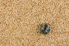 Glass globe lying on barley Stock Photography