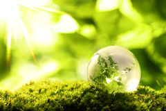Green World. Glass globe resting on moss stone in a forest Royalty Free Stock Image