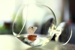 Glass goblet freedom drunkenness Stock Image