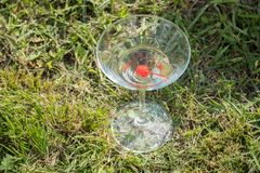 Glass goblet with cherry and champagne or martini on green grass in summer Royalty Free Stock Photos
