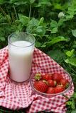 glass gräs mjölkar jordgubben Arkivbilder