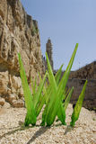 Glass Grass. Glass art at the King David Citadel Old City Jerusalem Israel Royalty Free Stock Images