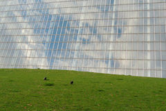 Glass and Grass Royalty Free Stock Photos