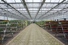 Glass greenhouse Stock Images