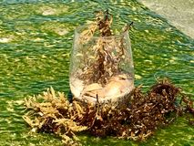 The Glass is half full. On a mossy jetty on Fort Lauderdale beach is a wine glass with water, sand, shells and kelp. Some see it as half full while a few may see royalty free stock photo