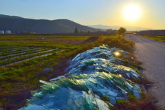 Glass heaps dumped roadside. Scenic view of heaps of of broken glass dumped roadside  against bright setting sun,Bulgaria,unconscionable,irresponsible attitude Royalty Free Stock Images