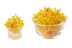 Glass holders with yellow orchid heads Royalty Free Stock Image