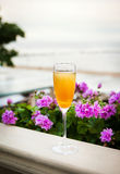 Glass of italian Bellini alcoholic cocktail. With peach on the evening beach royalty free stock image