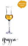 Glass of Italian grappa brandy. Watercolor, hand drawn - vector Illustration royalty free illustration
