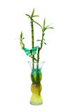 Glass jar with bamboo Stock Images