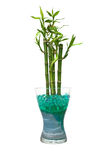 Glass jar with bamboo Royalty Free Stock Photo